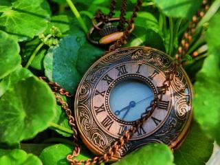 обои Часы на траве фото