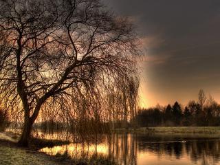 обои Дерево у реки фото