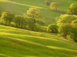 обои Летние зеленые луга фото