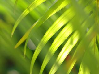 обои Трава на свету фото