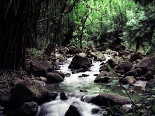 обои Весенний ручей в горном лесу фото