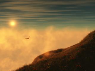 обои Птица в небе на закате фото