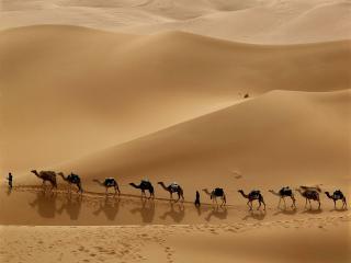 обои Караван в пустыне фото