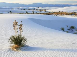 обои Белые пески фото