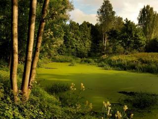 обои для рабочего стола: Затянутый зеленью пруд