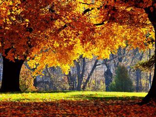 обои Осенний городской сквер фото