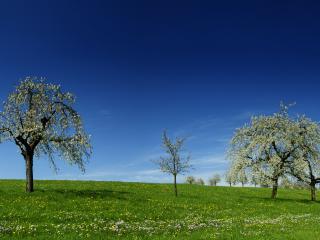 обои Три дерева стоят в ряд фото