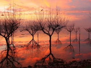 обои Весенние деревья, без земли фото