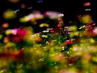 обои Летнее настроение, цветы, поляна фото