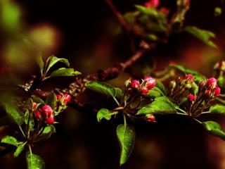 обои Маленькие  красные цветки фото