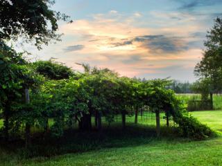 обои Вечер в зеленом парке фото