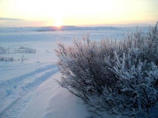 обои Зимний восход фото