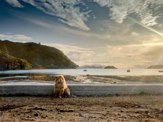 обои Собачка на фоне моря фото
