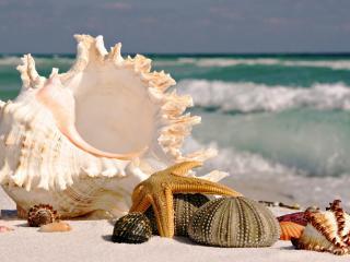 обои Морские ракушки на берегу фото