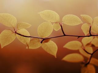 обои Пожелтевшие листья на ветви дерева фото