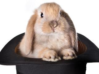 обои Кролик в черной шляпе фото