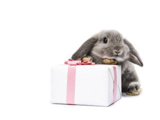 обои Кролик и подарок фото
