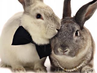 обои Кролики. Официальное мероприятие фото
