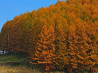 обои Осенний лес на холме фото