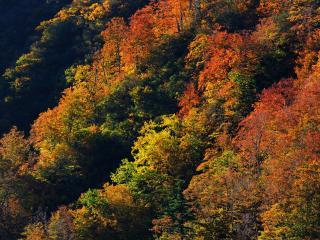 обои Осень. Красивая пора фото