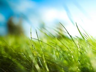 обои Трава. Размытый фон фото