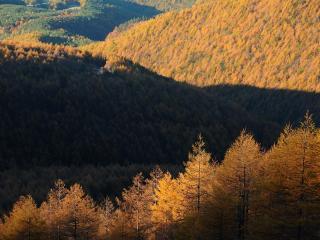 обои Холмы усеянные осенними деревьями фото