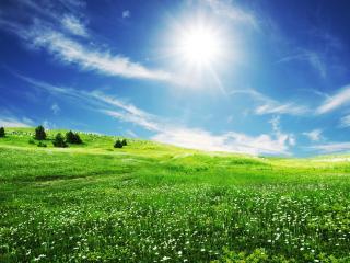 обои Яркое солнце над зеленым лугом фото