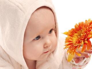 обои Малыш и цветок фото