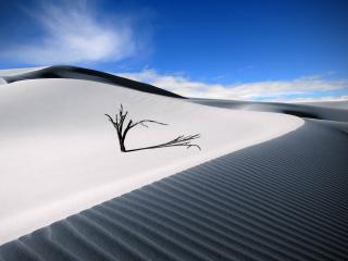 обои Засохшее дерево в пустыне на белом песке фото