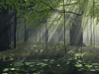 обои Густой лес фото