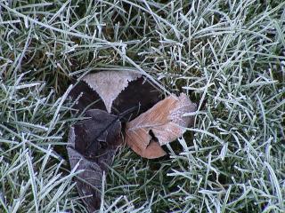 обои Замерзшая трава морозным утром фото