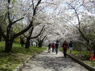 обои Красивый цветущий парк фото