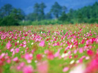 обои Красивое цветочное поле фото