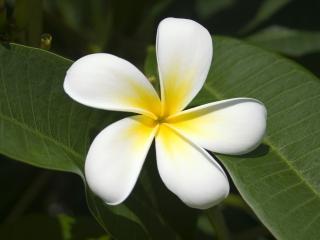 обои Красивый бело-жёлтый цветок фото