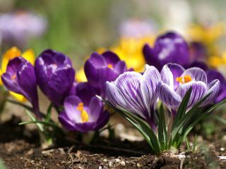 обои Фиолетовые цветы - симпатичные фото