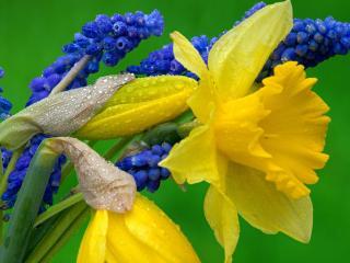 обои Яркие,   жёлтые цветы фото