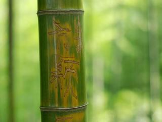 обои Иероглифы вырезаные на бамбуке фото
