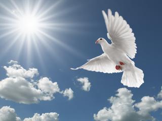 обои для рабочего стола: Солнце небо облака птица