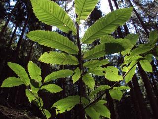 обои Зеленая веточка листьев на фоне леса фото