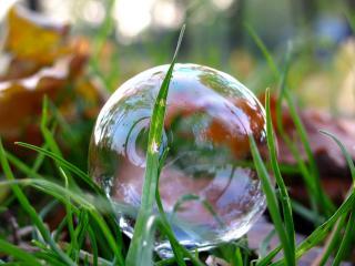 обои Пузырек в траве фото
