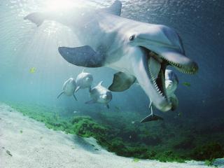 обои Дельфины в лагуне фото