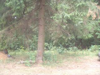 обои Зеленый зеленый лес фото