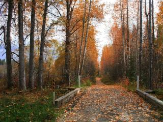 обои Дорога в парке фото