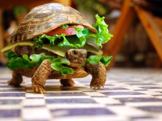 обои Большой бутерброт черепашка фото