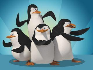 обои Мадагаскарские пингвины фото