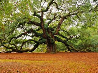 обои Необычное ветвистое дерево в парке фото