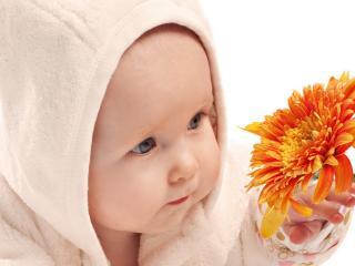 обои Малыш с цветком фото
