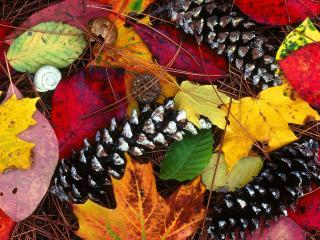 обои Шишки осенью фото