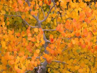 обои Желто-оранжевая осень фото