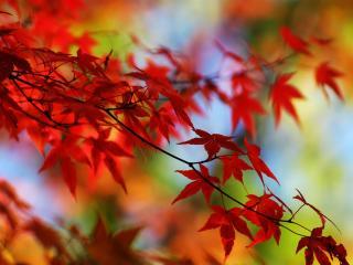 обои Очень яркие листья фото